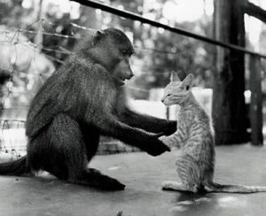 Even different species will ask each other to dance if prompted well ;)