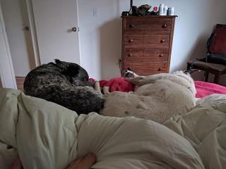 UC516_Day_14_Sleepy_Dogs